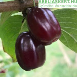 Cornus mas Kasanlak - Húsos-som gyümölcs