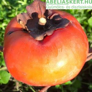 Diospyros kaki Tipo - Kakiszilva, datolyaszilva, hurma, sharon gyümölcs