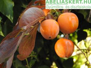 Diospyros kaki Vaniglia - Kakiszilva datolyaszilva, hurma, sharon gyümölcs