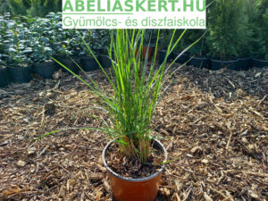 Calamagrostis-x-acutiflora-Karl-Foerster