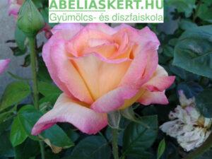 elhervadt rózsa metszés